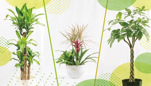 観葉植物3つ